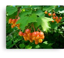 Berries Jubilee Canvas Print
