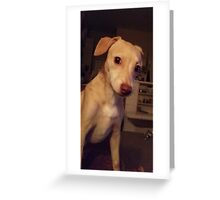 """My Gorgeous Puppy, """"Honey """" ♡ Greeting Card"""
