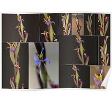 Flower on a Bromeliad Airplant # 3 Poster