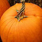 Pumpkin by spencerphotos