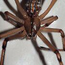 Spider Eyes by Debbie Sickler