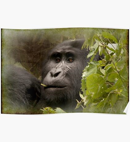 kanyonyi the gorilla Poster