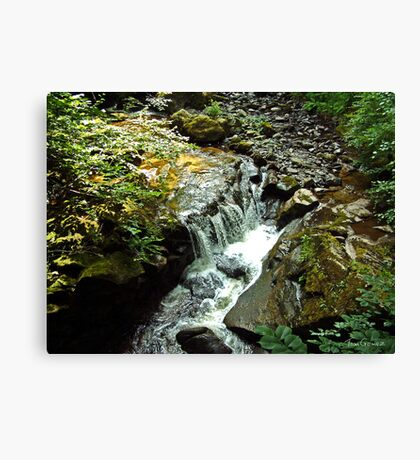 Tumbling Waters Canvas Print