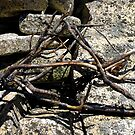 Sticks and Stones by Douglas Hill