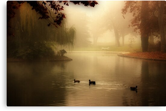 Tranquility by Barbara  Brown
