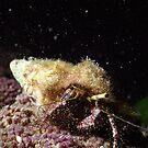 Hermit Crab Underwater by Kristin Nichole Hamm