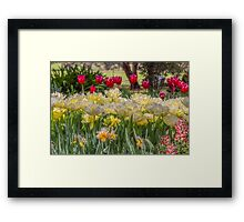 Springtime at the Tulip Farm Framed Print