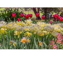 Springtime at the Tulip Farm Photographic Print