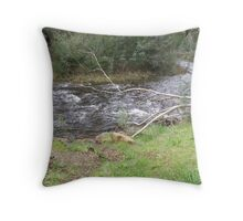 Trout Stream in the Mountains Throw Pillow