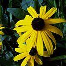 blackeyed by yellowpony