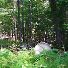 Old Cemetery in the Woods by RLHall