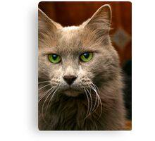 Feline Intensity Canvas Print