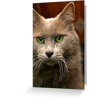 Feline Intensity Greeting Card