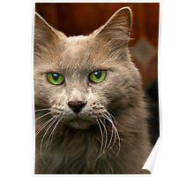 Feline Intensity Poster