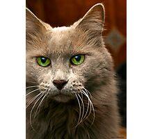 Feline Intensity Photographic Print