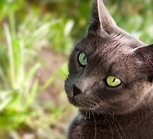 Green Eyes by Sue  Cullumber