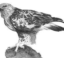 Rough-legged Hawk by SigneNordin