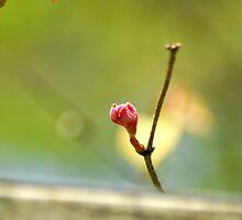 Grape Bud by Amanda Jordan