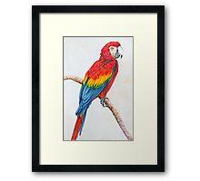 The Parrot Sketch Framed Print