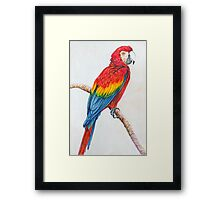 The Parrot Sketch Framed Print