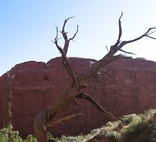 Arches - Tree by Luke Brannon