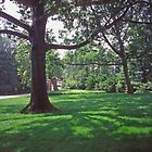 Dumbarton Oaks, Washington DC, in the Grounds by Priscilla Turner