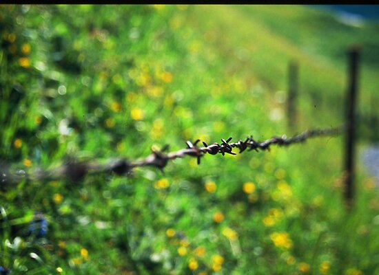 Barb-Wire by soulphoto