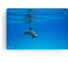 A Privilege ~ Dolphin Encounter  Canvas Print