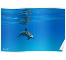 A Privilege ~ Dolphin Encounter  Poster