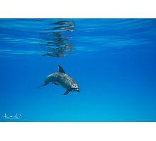 A Privilege ~ Dolphin Encounter  Photographic Print