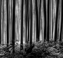 Down in the woods by leightoncollins