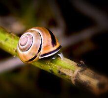 Snail by Richard Hamilton-Veal