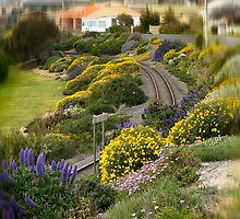 Blooming Railway by Murray Swift
