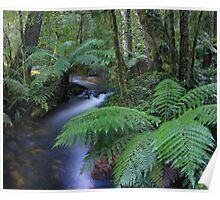 tree fern valley Poster