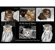 For the Love of Kittens Photographic Print