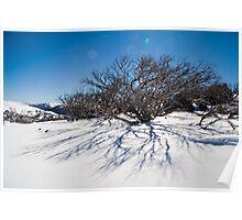 Snow Gum Reflection, Guthega, NSW, Australia Poster