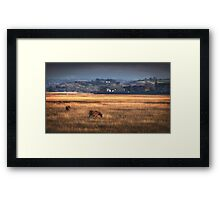 Marsh ponies at Penclawdd village Framed Print