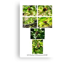 The Red Admiral Collection Canvas Print