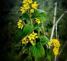 Yellow by Richard Hamilton-Veal