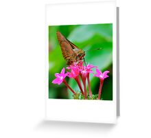 Sipping the Nectar Greeting Card