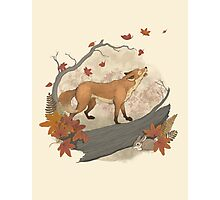 fox and rabbit Photographic Print