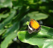 Butterfly 17 by Gotcha  Photography