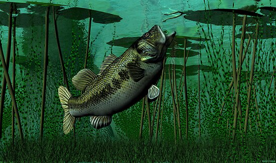 Largemouth Bass by Walter Colvin