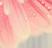 baby pink by Ingz
