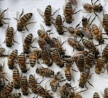 Honey Bees by Patricia Montgomery