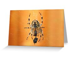 The Garden Spider........  Greeting Card