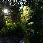 morning at the river cuale II - mañana en el rio cuale by Bernhard Matejka