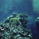 Underwater Scenery by Kristin Nichole Hamm