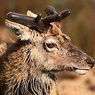 Red Deer by ljm000