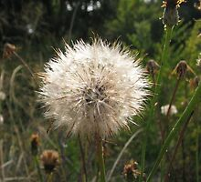 Delicate weed by kate18a